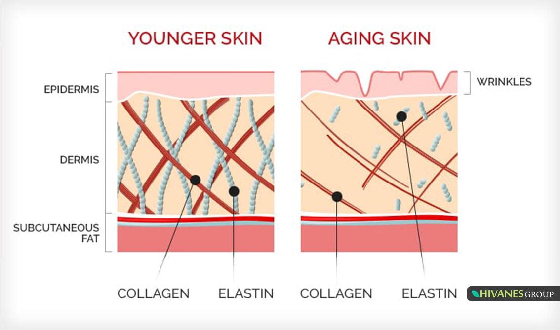 تاثیر کلازن در پوست